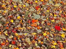 Colorful red maple leaves in a fountain royalty free stock images