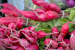 Colorful red radishes at the market. Unique red rafishes with greens Royalty Free Stock Image