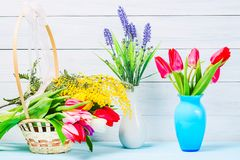 Colorful red spring tulip flowers in nice blue vase with tulips and mimosa bush in basket and vase with lavender on light wooden b. Ackground as greeting card stock photos