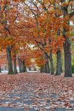 Colorful red and yellow foliage trees in garden during autumn at Wilhelm Külz Park in city of Leipzig, Germany.  stock photo