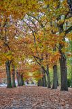 Colorful red and yellow foliage trees in garden during autumn at Wilhelm Külz Park in city of Leipzig, Germany.  stock images