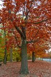 Colorful red and yellow foliage trees in garden during autumn at Wilhelm Külz Park in city of Leipzig, Germany.  stock image