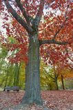 Colorful red and yellow foliage trees in garden during autumn at Wilhelm Külz Park in city of Leipzig, Germany.  stock photos