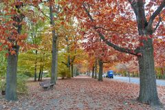 Colorful red and yellow foliage trees in garden during autumn at Wilhelm Külz Park in city of Leipzig, Germany.  royalty free stock images