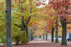 Colorful red and yellow foliage trees in garden during autumn at Wilhelm Külz Park in city of Leipzig, Germany.  royalty free stock image