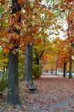 Colorful red and yellow foliage trees in garden during autumn at Wilhelm Külz Park in city of Leipzig, Germany.  royalty free stock photography