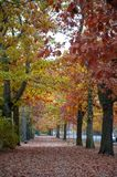 Colorful red and yellow foliage trees in garden during autumn at Wilhelm Külz Park in city of Leipzig, Germany.  royalty free stock photos
