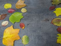 Colorful red yellow and green fallen autumn leaves on grunge gra Stock Image