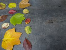 Colorful red yellow and green fallen autumn leaves on grunge gra Stock Photo