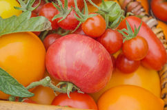 Colorful  red, yellow, orange, green tomatoes. Stock Photography