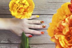 Colorful red Yellow orange manicure with a design. Of tulips sliders on a female hand stock photos