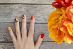 Colorful red Yellow orange manicure with a design. Of tulips sliders on a female hand stock image