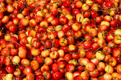 Colorful Red and Yellow Rainier Cherries. A seemingly endless pile of sweet red and yellow Rainier Cherries, shot at the Pier 39 Farmers Market in San Francisco Stock Photos