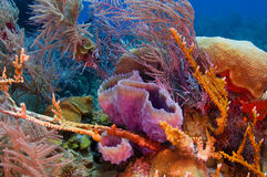 Colorful Reef royalty free stock photos
