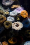 Colorful reef. Beautiful colorful ocean plants on a piece of marine reef Stock Image