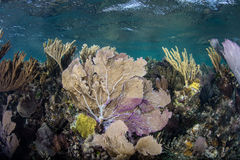 Colorful Reef in Caribbean Sea Stock Photos