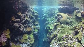 Colorful Reef Crevice Stock Image