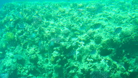 Colorful reef with fishes and corals. Colorful reef underwater landscape with fishes and corals stock video footage