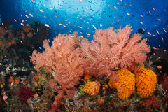 Colorful reef,Raja ampat,Indonesia Stock Photo