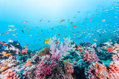 Colorful reef Royalty Free Stock Photography