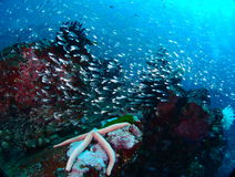 Colorful reef Stock Photography