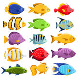 Colorful reef tropical fish set. Colorful coral reef tropical fish set vector illustration. Sea fish collection isolated on white background. Cartoon aquarium Royalty Free Stock Photos