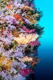 Colorful reef wall Stock Images