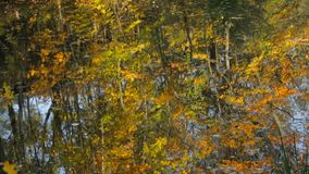 Reflection in the lake. Colorful reflection of autumn trees in a lake stock video footage