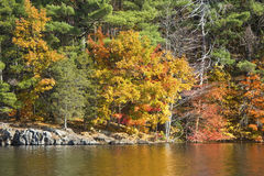 Colorful reflections of fall foliage on West Hartford reservoir. Vibrant autumn colors in the forest along the shore of West Hartford Reservoir in Connecticut Stock Images