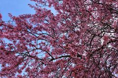 Colorful and relaxing garden with cherry blossom tree in Riopar, Albacete. Colorful and relaxing garden with cherry blossom tree in Riopar, Albacete, Spain stock photos