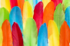 Colorful remiges feathers. Close up colorful remiges feathers spread out Stock Images
