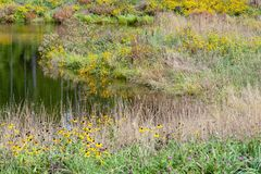 Colorful riparian scenery royalty free stock photo