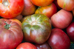 Colorful ripe tomatoes. Colorful group of ripe tomatoes ready for eating Royalty Free Stock Photography