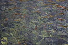 Colorful ripples of water Royalty Free Stock Photo