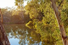 Colorful River Water Reflections. Beautiful water reflections in early morning light on a still river in Australia stock photography