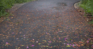 Colorful road full with flowers drop on the rain day. Royalty Free Stock Images