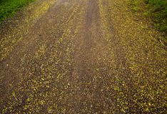Colorful road full with flowers drop on the rain day. Stock Images