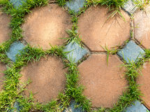 Colorful rock tile with grass in the garden Royalty Free Stock Images