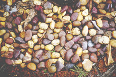 Colorful rocks texture with dry leaf, soil and plant. Colorful rocks texture with dry leafs, soil and plant Royalty Free Stock Image