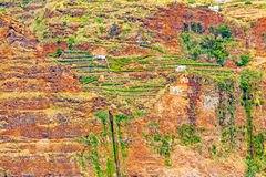 Colorful rocky cliff coast of Madeira with banana plantations Stock Images
