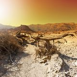 Colorful Desert in Israel. Stock Photo