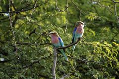 Colorful Rollers; mum & baby. Royalty Free Stock Photography