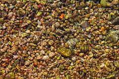 Colorful rolling stones sea bottom pattern. Musk seaweed Royalty Free Stock Photos