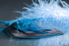 Colorful rooster feather with details Stock Image