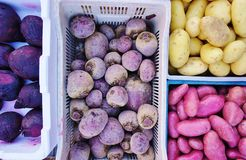 Colorful root vegetable. Fresh purple root vegetables at a French farmers' market Royalty Free Stock Photography