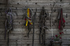 Colorful ropes. Colorful rope halters for horses Stock Photo