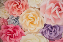 Colorful rose backdrop Royalty Free Stock Photography