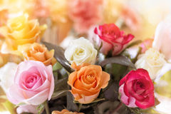 Colorful Rose Bouquet Stock Photo