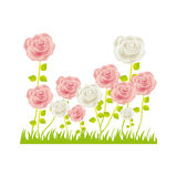 Colorful rose bush in pasture floral design Stock Photo