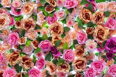 Colorful rose floral wall background. Backdrop of colorful Rose Floral royalty free stock image